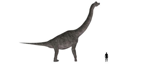 ブラキオサウルス ブラキオサウルス、頭のてっぺんが鼻モッコリ、前肢が後肢よりも長い大型竜脚類