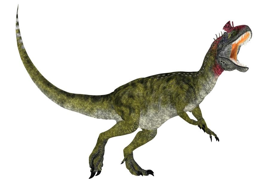 クリオロフォサウルスの画像 科名 ディロフォフォサウルス科 分類 獣脚類、竜弓類、主竜類 生息地