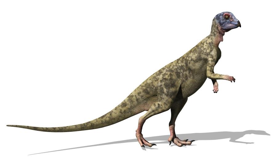 ヒプシロフォドン(Hypsilophodon)   恐竜図鑑