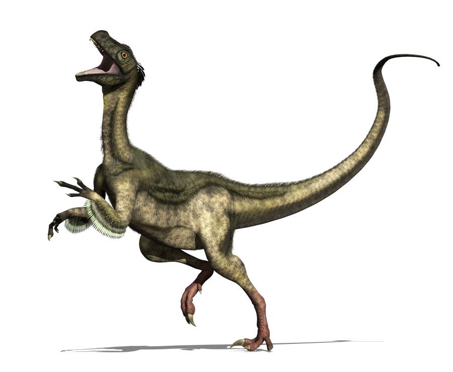 オルニトレステス(Ornitholestes...