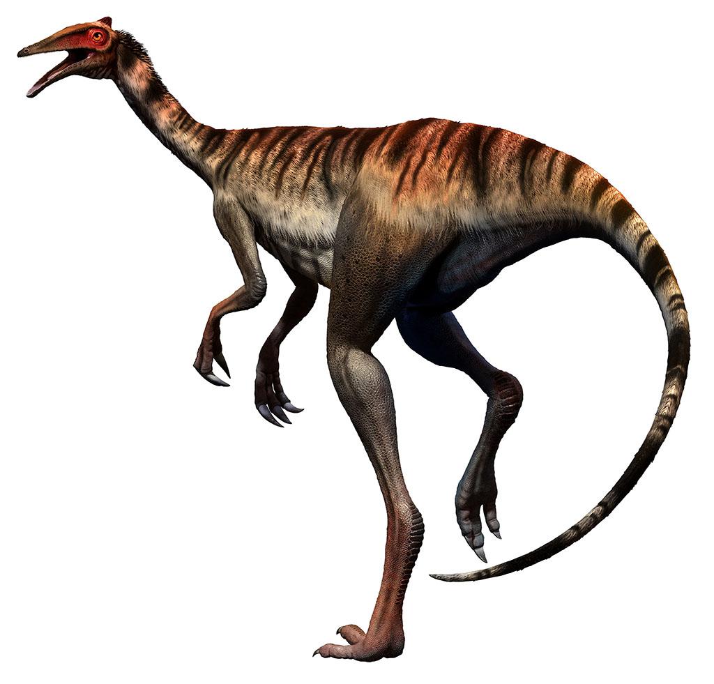 ペレカニミムス(Pelecanimimus) | 恐竜図鑑
