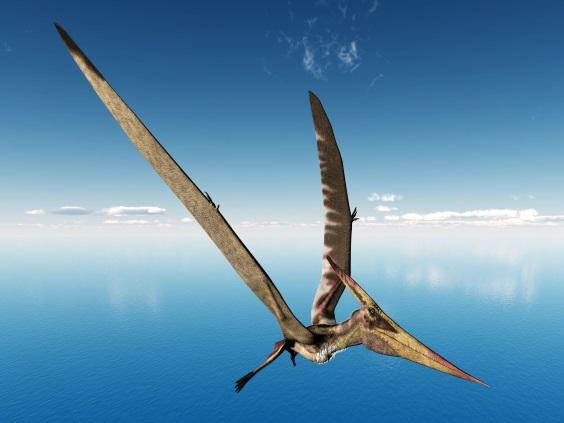 プテラノドン                        Pteranodon