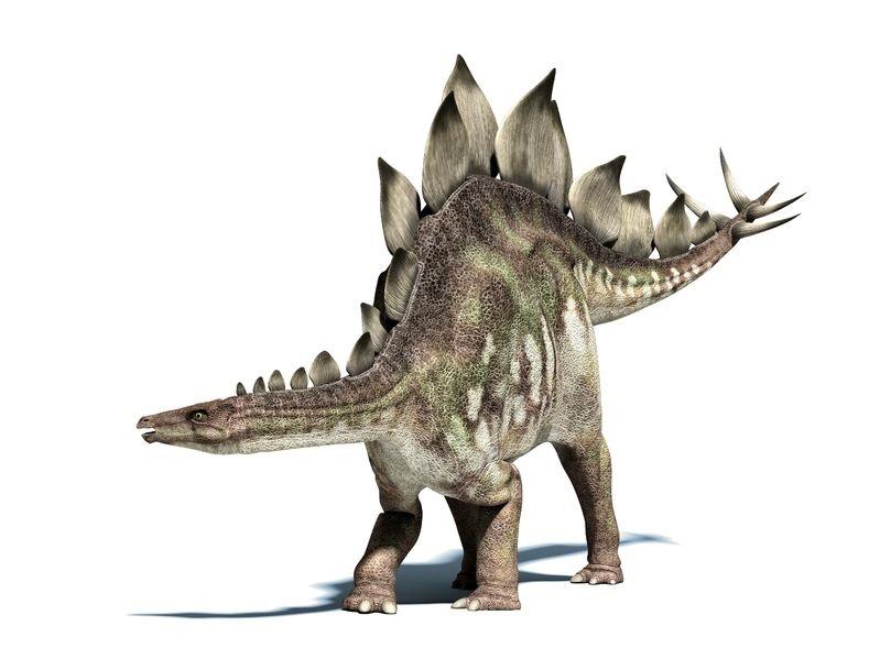 恐竜の種類 人気ランキング TOP50 | 恐竜図鑑