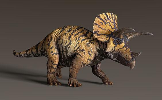 トリケラトプスの画像2