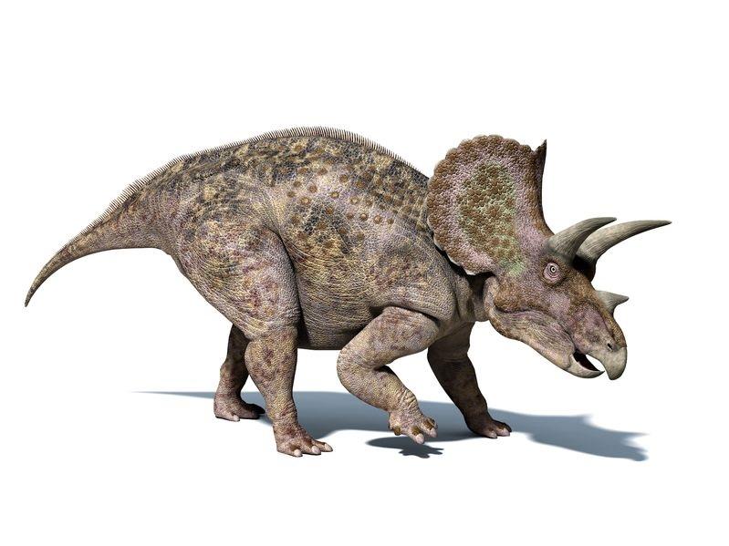 トリケラトプスの画像 p1_33
