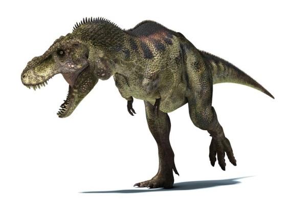 ティラノサウルスの画像 p1_2