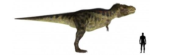 ティラノサウルスの画像 p1_21