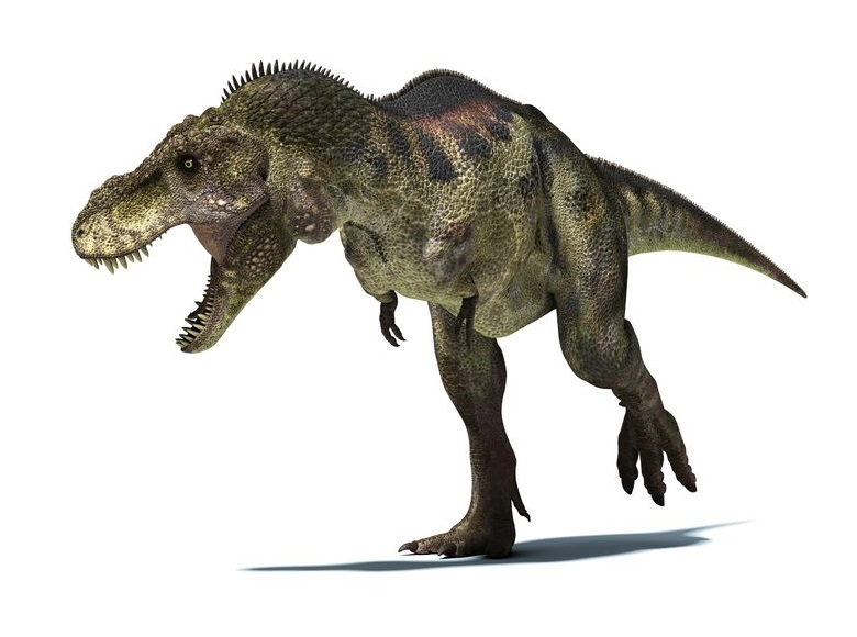 http://www.kyouryu.info/img/dinosaur/tyrannosaurus_l.jpg